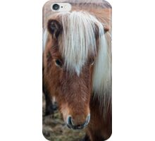 Icelandic Horse Close Up  iPhone Case/Skin