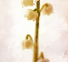 Lily Of The Valley (Card) by irinatsy