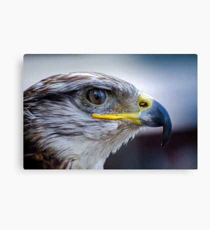 Falcon bird Canvas Print
