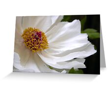 Pure and perfect peony Greeting Card
