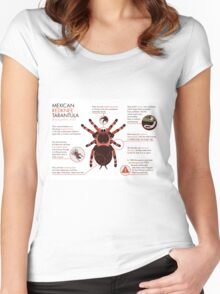 Infographic: Mexican redknee tarantula  Women's Fitted Scoop T-Shirt