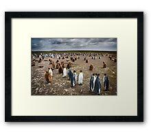 Penguin Colony Framed Print
