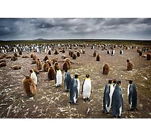 Penguin Colony Photographic Print