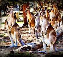 Kangaroo Gully by SandyA