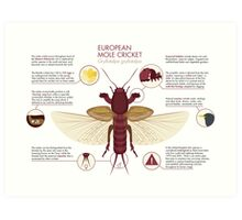 Infographic: European Mole Cricket Art Print