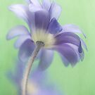 Whispers of blue by Mandy Disher