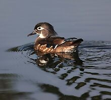 out for a swim by kathy s gillentine