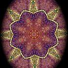 Digital Mandala : Colour Coded vignette by danita clark