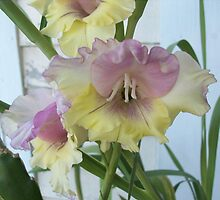 Pink Lemonaid Gladiolas by wildworld78