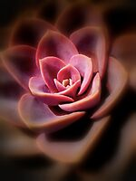 Cactus Rose by Eugenio