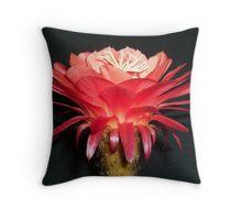 "Trichocereus (Echinopsis) Cactus Hybrid ""Volcanic Sunset"" opening Throw Pillow"