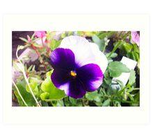 "Pansy bloom (aka ""Viola Tricolor) Art Print"