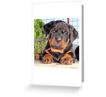 Mollie: A Puppy Portrait Greeting Card