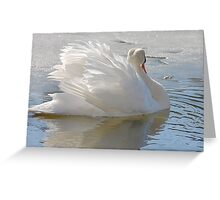 A Swans Beauty Greeting Card