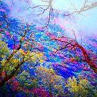 Woodland Reflections by Richard Murch