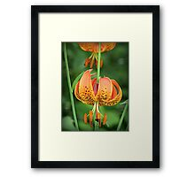 COLOR IS JOY Framed Print
