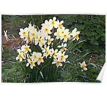 Daffodils in the wild Poster