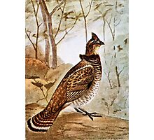 Ruffed Grouse Photographic Print