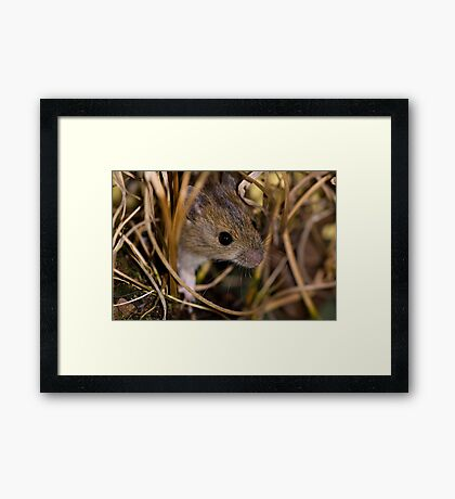 Cute field mouse Framed Print