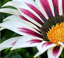 Treasure flower.  by ScenicViewPics