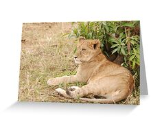 Relaxing before the hunt. Greeting Card