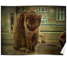 Nature of the Cat Poster