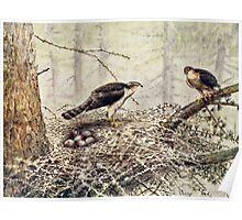 Sparrow Hawks Poster