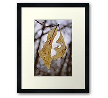 DELICATE ARCHITECTURE Framed Print