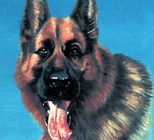 BRUCE german shepherd by james thomas richardson