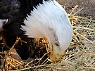 Nesting by Veronica Schultz