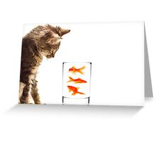 A kittens curiosity Greeting Card