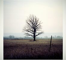 lone tree. by Brian Roberts