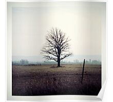 lone tree. Poster