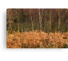 Winter Bracken and Birches Canvas Print