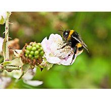 Bee on Blackberry Flower Photographic Print