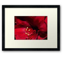 Loving Tribute Framed Print