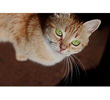 Domesticated carnivorous mammal Photographic Print