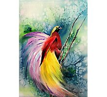 Bird of Paradise New Guinea Photographic Print