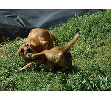 Oi! That tickles!!! Photographic Print