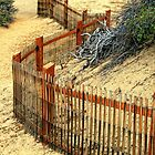 Fenced In......... Or Out??? by TeresaB