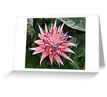 Pink & Purple Bromeliad Flower Greeting Card