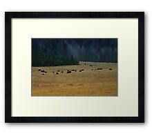 In The Prairies, Bison Relaxing Framed Print