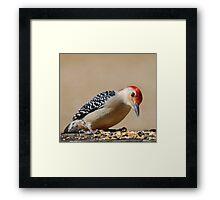 Male Redbellied Woodpecker Framed Print