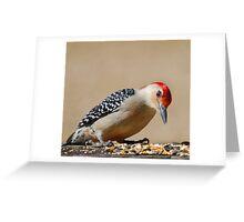 Male Redbellied Woodpecker Greeting Card