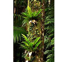 Green Totem Pole Photographic Print