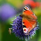 Peacock by Gabor Pozsgai