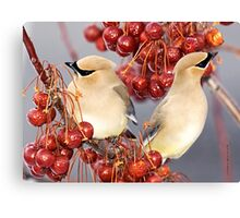 Feathers and Cherries Canvas Print