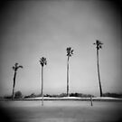 Four Palms by Mary Grekos