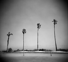 Four Palms by Mary Grekos