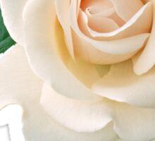 Gentle white rose Sticker